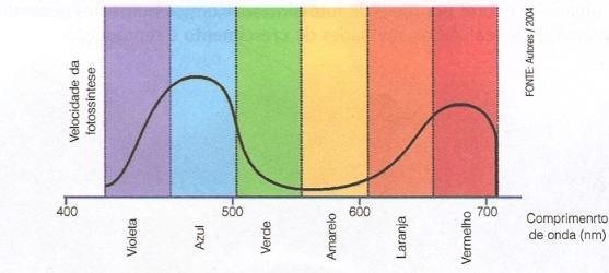 Velocidade da fotossíntese de acordo com a luz