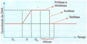 Fase intérfase da mitose