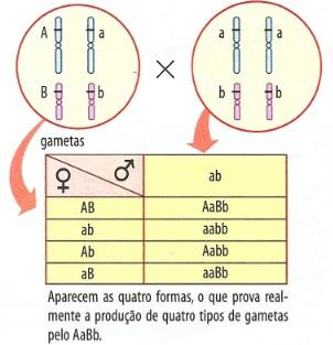 Linkage tabela de genes