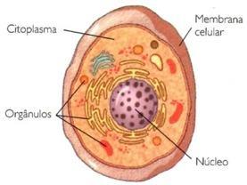 Localização das organelas dentro de uma célula