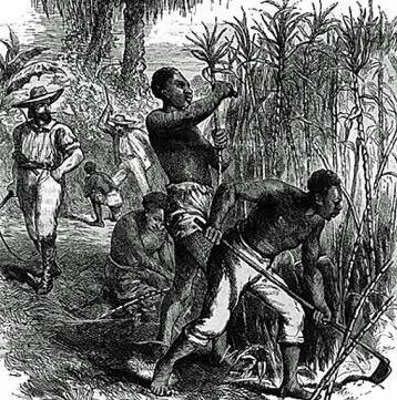 Escravos negros em uma plantation de cana-de-açucar