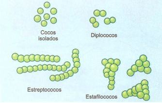 Bactérias esféricas