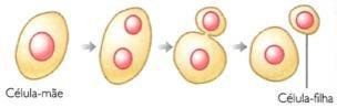 Brotamento: tipo de reprodução assexuada.