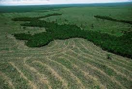 Lavoura em contraste com a floresta na Amazônia