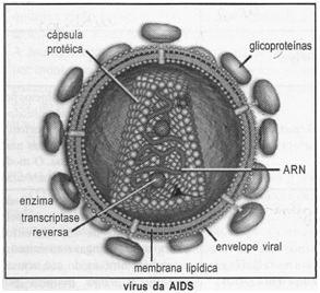 Vírus da AIDS